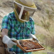 Christopher Carlberg, senior enviornmental science major, wears protective gear while holding up a frame of the containment box. The box is covered in fresh honey-saturated combs from a bee farm in San Bernardino for his business, Hallelujah Honey. Courtney Coleman   Banner