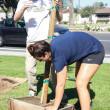Jasmine Emeish  Banner Pua Wong, freshman biology major, helps plants trees during the Spring Arbor Day event April 2 at California Baptist University.